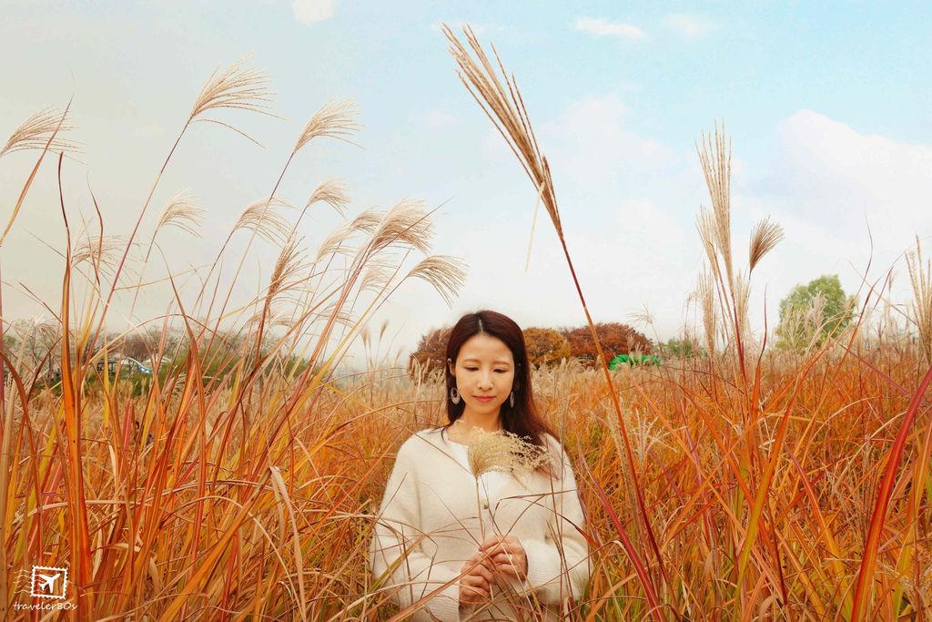 19 天空公園_芒草 (194)_MFW.jpg