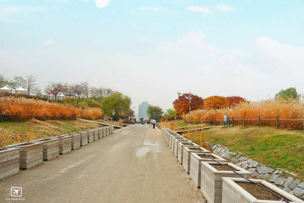 19 天空公園_芒草 (266)_MFW.jpg