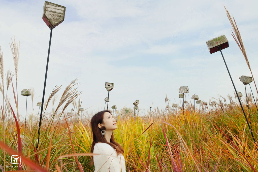 19 天空公園_芒草 (292)_MFW.jpg