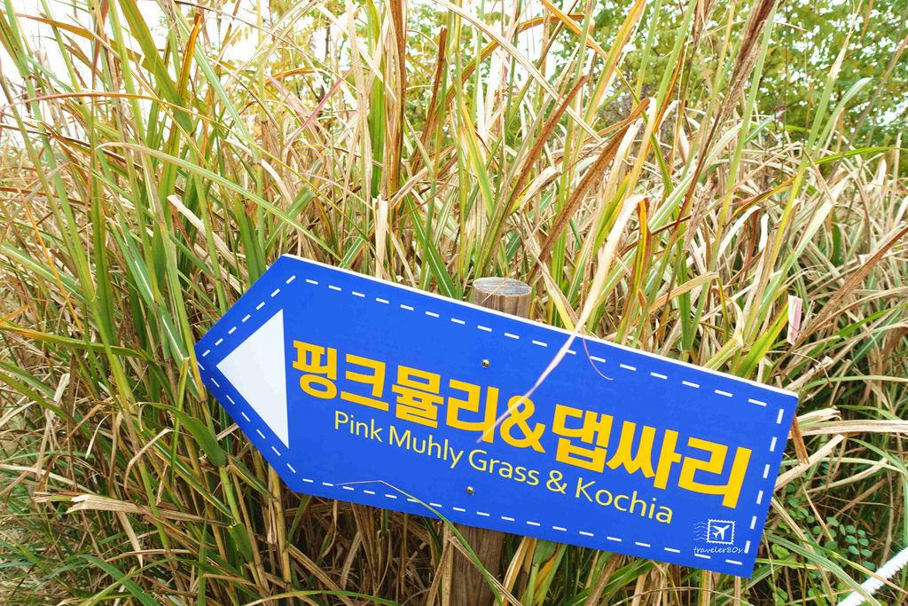 19 天空公園_芒草 (320)_MFW.jpg