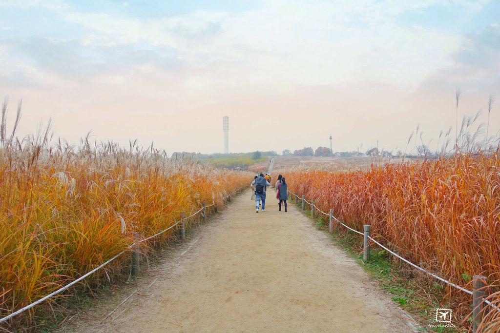 23 天空公園_芒草 (14)_MFW.jpg