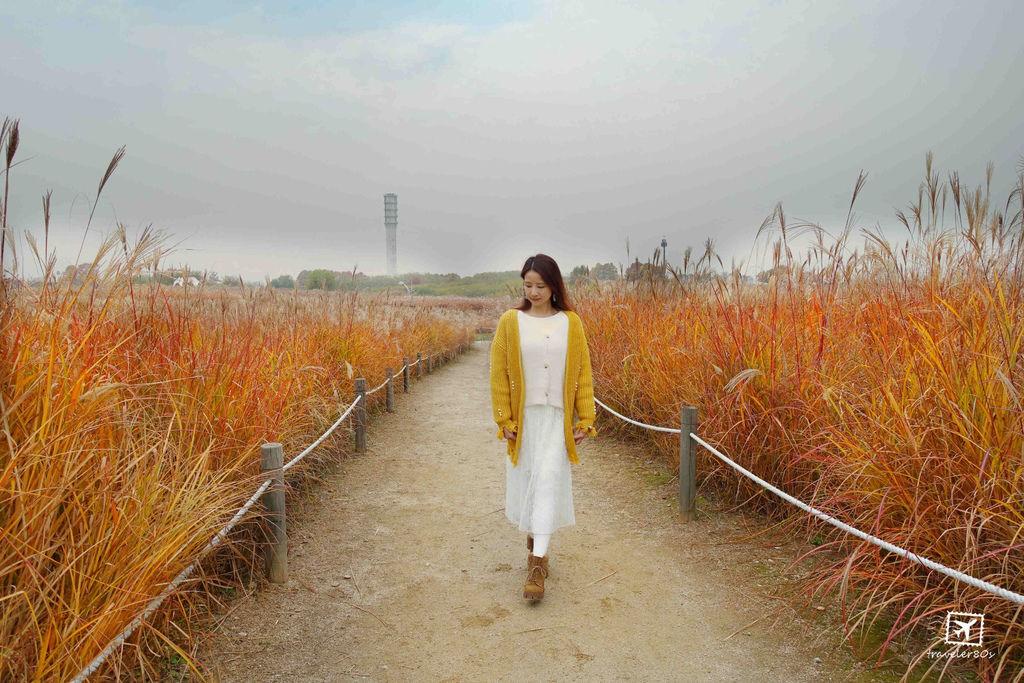 23 天空公園_芒草 (101)_MFW.jpg