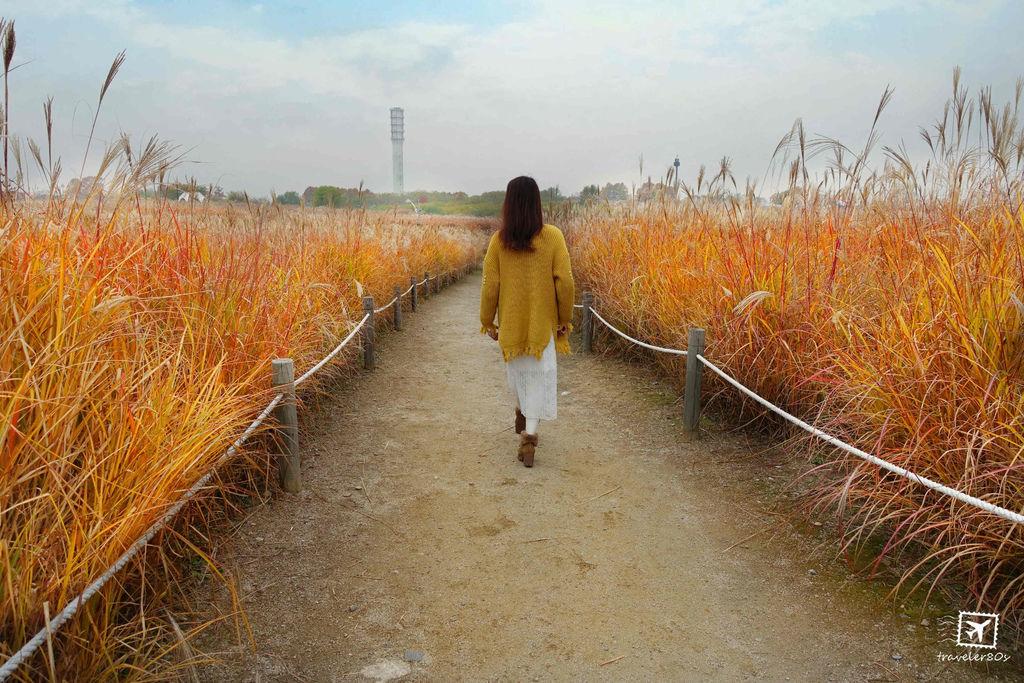 23 天空公園_芒草 (86)_MFW.jpg