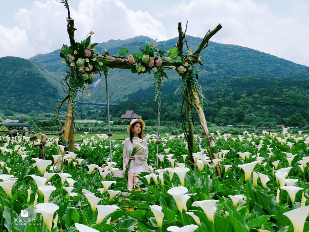 陽明山海芋 (87)_mh1584203162014_compress21.jpg