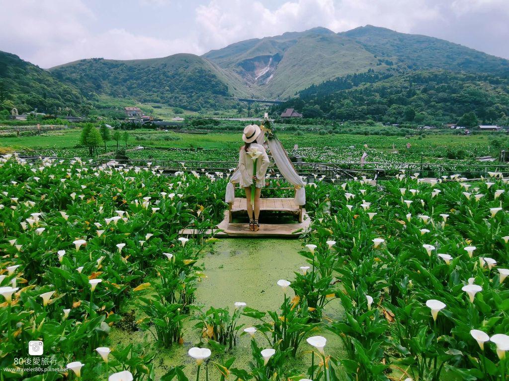 陽明山海芋 (61)_mh1584201179037_compress53.jpg