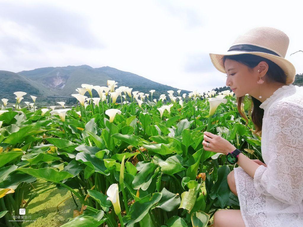 陽明山海芋 (240)_mh1584256501069_compress64.jpg