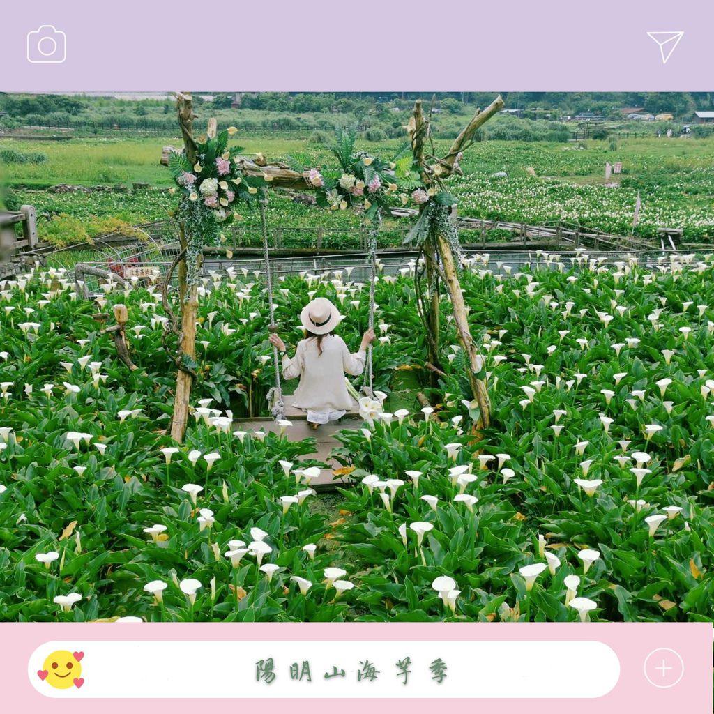 陽明山海芋 (322)_mh1586071156899_compress99.jpg
