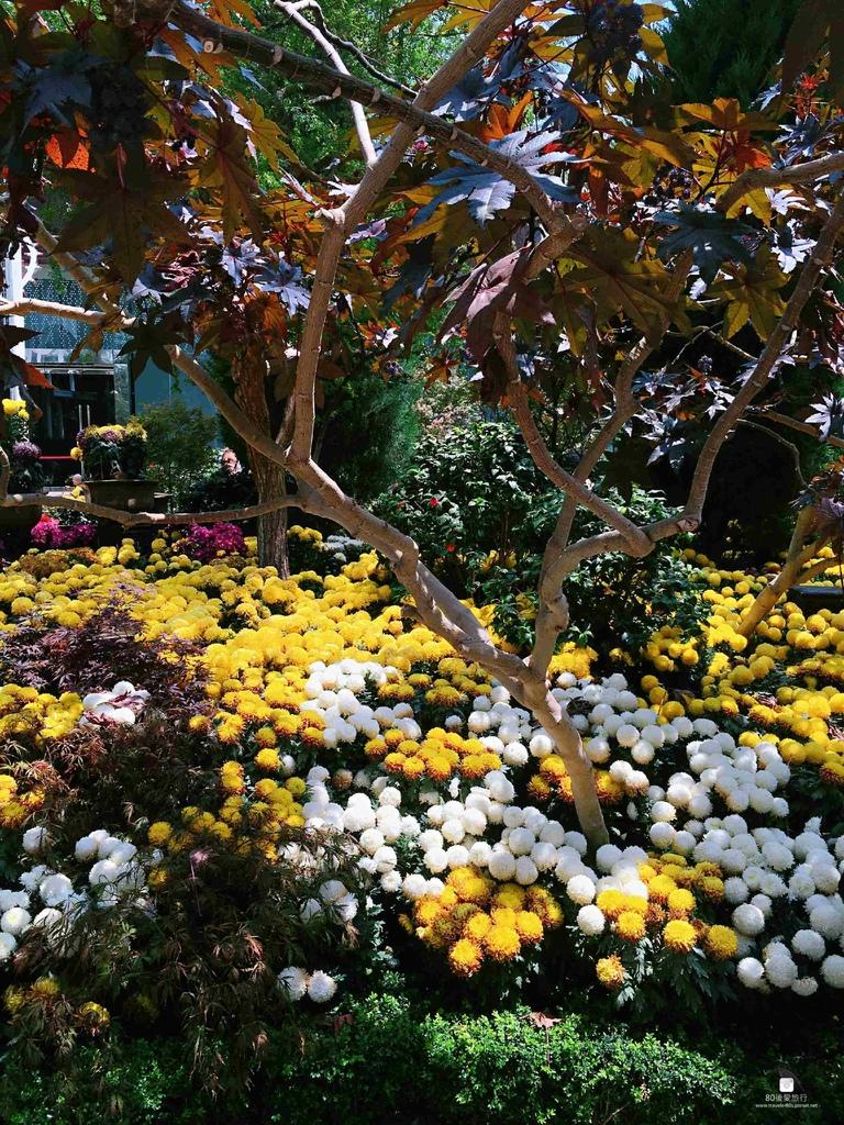 43_Flower Dome (93)_mh1593269095138_compress71.jpg
