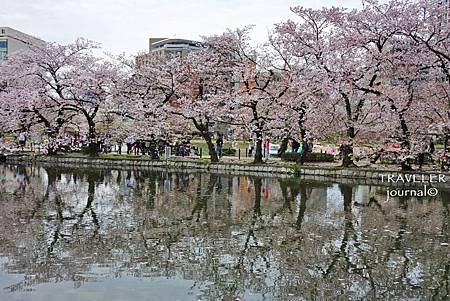 不忍池畔櫻花.jpg