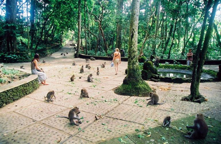 烏布猴子森林3