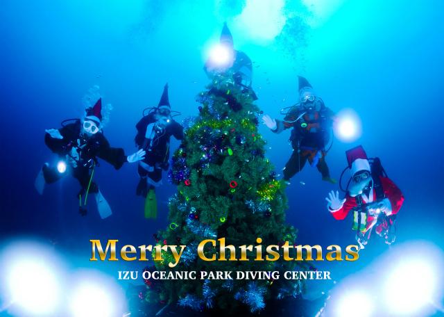 日本伊豆海洋公園海底聖誕樹1