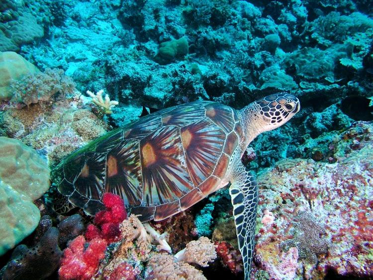 Turtle-Cove3