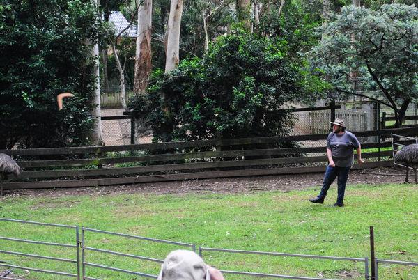 律律-Koala Park Sanctuary06