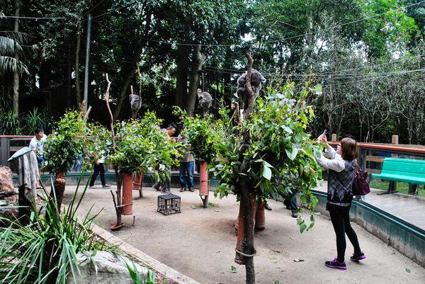 律律-Koala Park Sanctuary12