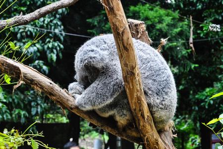 律律-Koala Park Sanctuary14