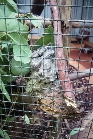 律律-Koala Park Sanctuary15