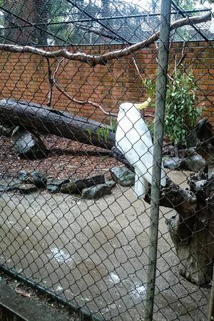 律律-Koala Park Sanctuary16