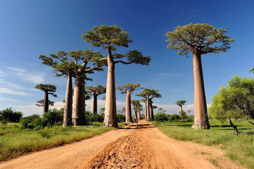 Avenue des Baobabs03