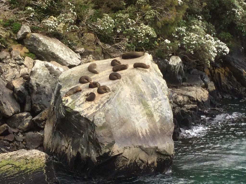 曾正宏~米佛峽灣-海豹岩1