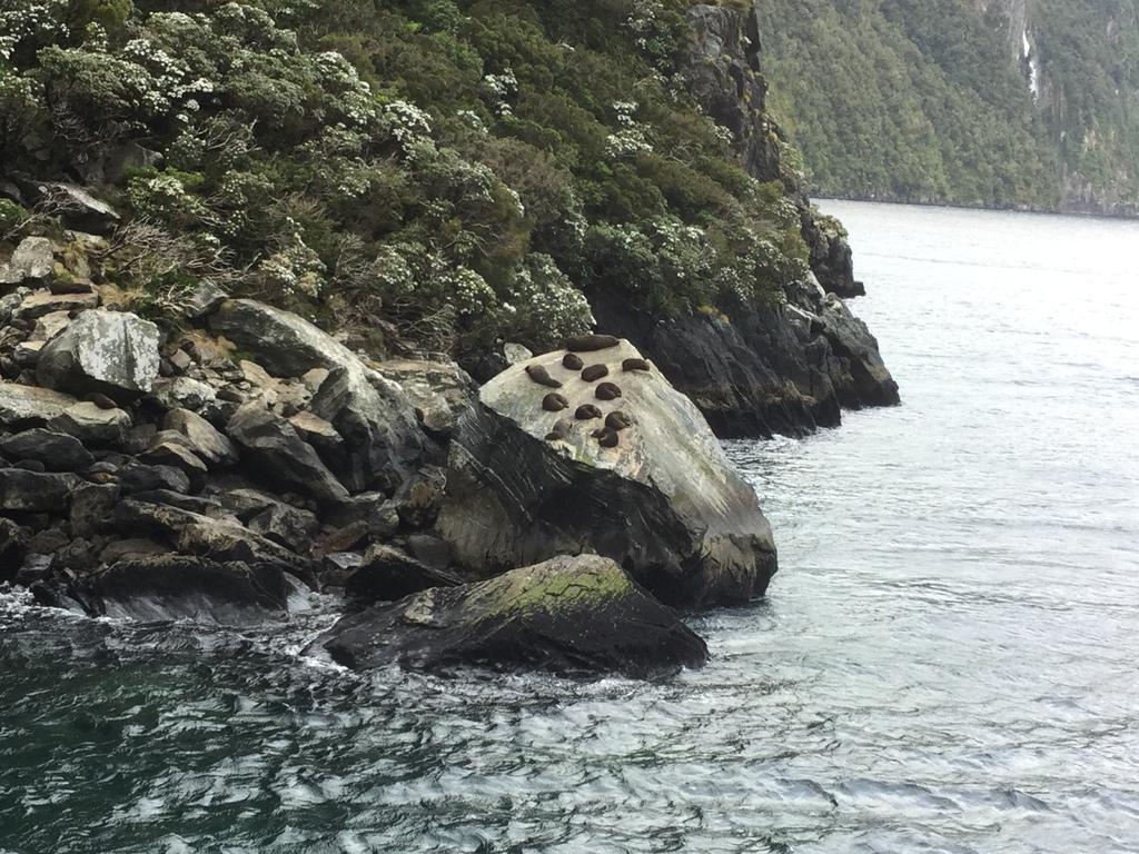 曾正宏~米佛峽灣-海豹岩2