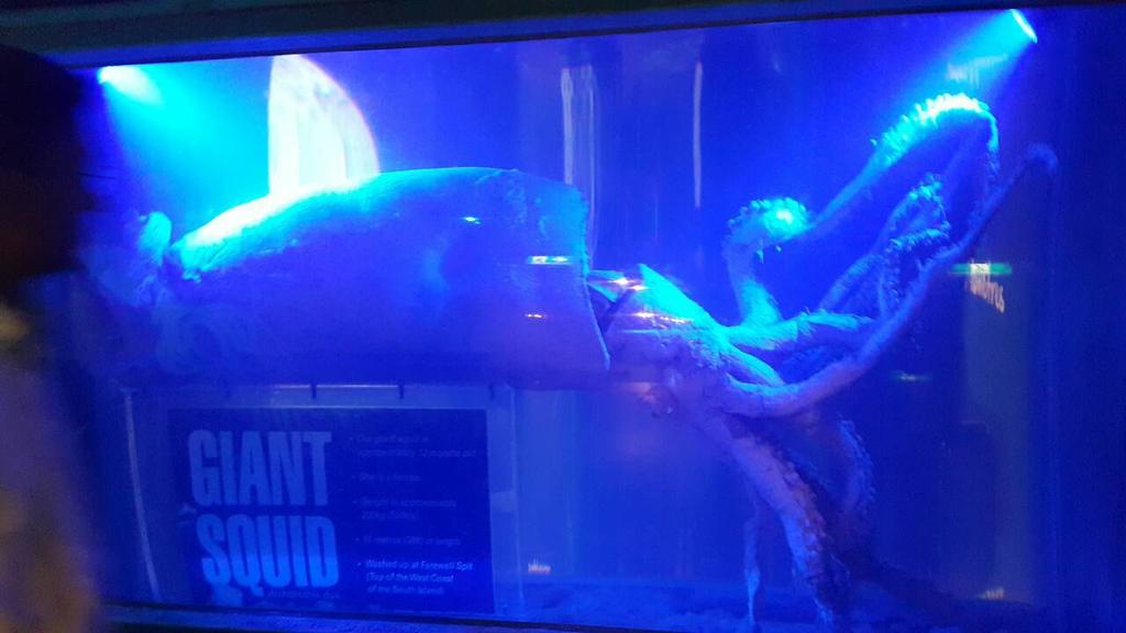 謝麗紅-凱利達頓水族館-04