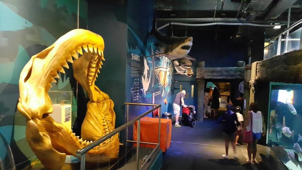 謝麗紅-凱利達頓水族館-05