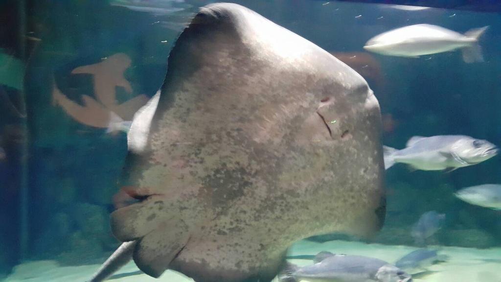 謝麗紅-凱利達頓水族館-06