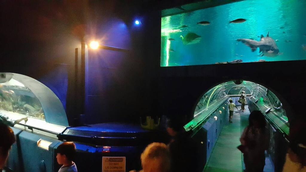 謝麗紅-凱利達頓水族館-08
