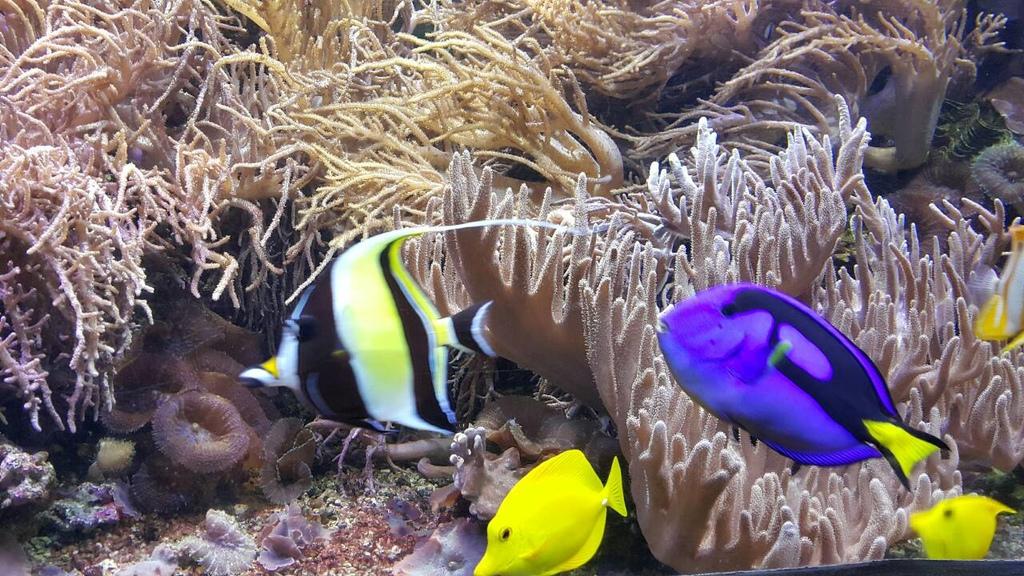 謝麗紅-凱利達頓水族館-09