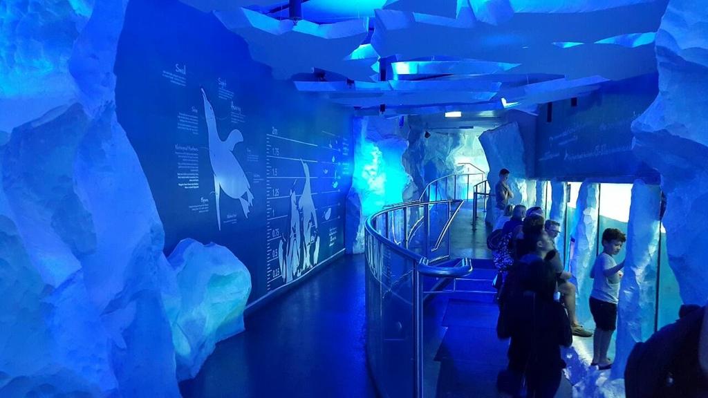 謝麗紅-凱利達頓水族館-10