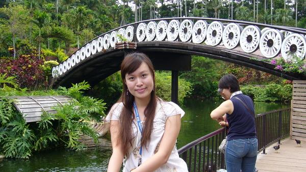 植物園的牛車輪橋.JPG