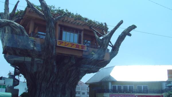 傳說中的樹包屋..車上拍.JPG