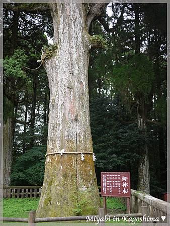 霧島神社6