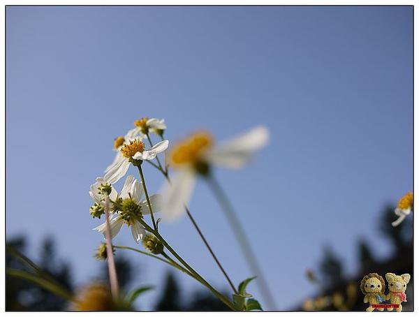 小花與天空.jpg