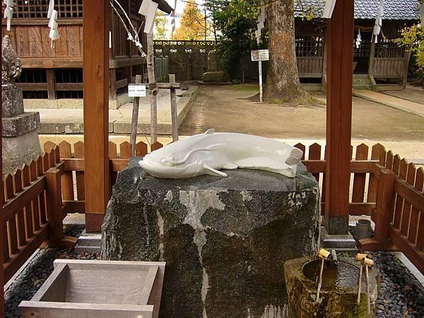 豐玉姬神社裡的鯰魚。據說摸了牠就會和牠一樣變的皮膚白皙喔~