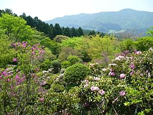石楠花的散步道路.jpg