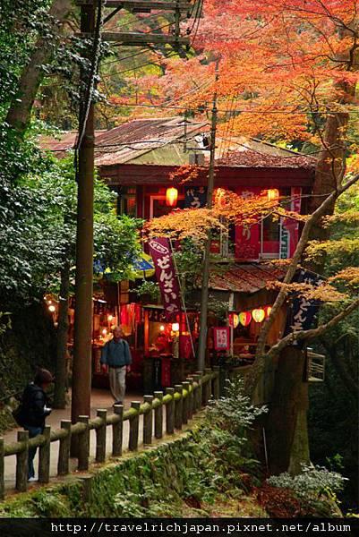 大阪近郊紅葉真迷人