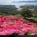 春天的長崎隨處可賞杜鵑花名所