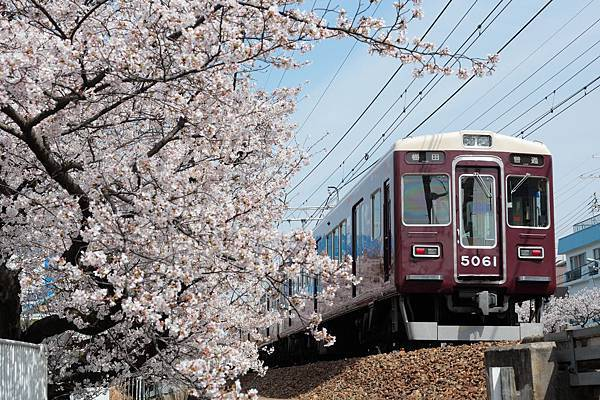 A.櫻花+阪急電車