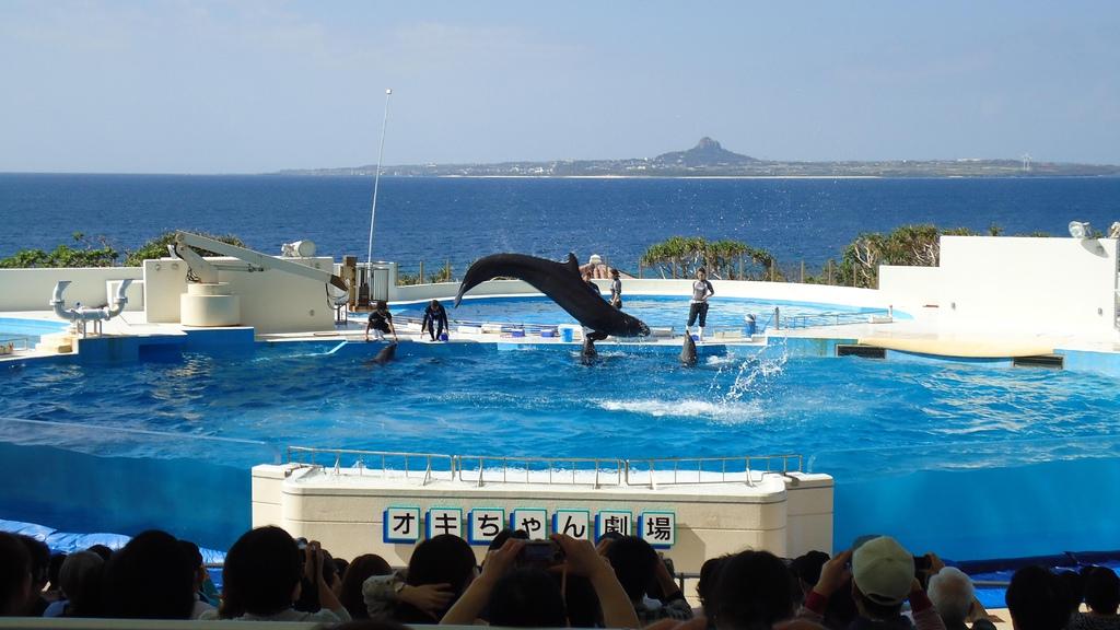 沖繩美麗海水族館海豚劇場