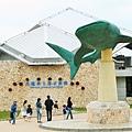 沖繩-美麗沖繩之海水族館2