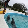 沖繩-美麗沖繩之海水族館3