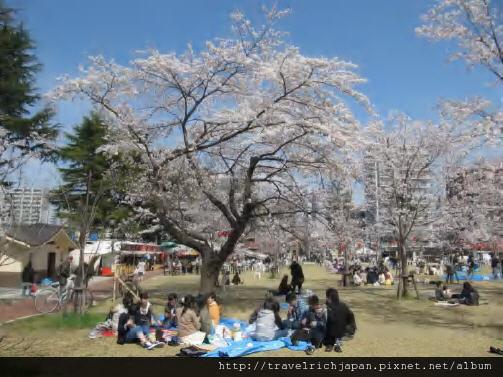 sakura-nishi.jpg