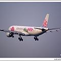 中華航空B-18305蝴蝶蘭彩繪飛機05.jpg