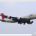 JAL JA8921客機.jpg
