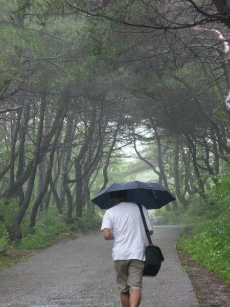 雨中走上鳳停寺