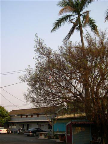 舊車站與椰子