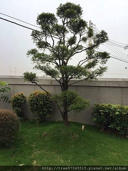 苑裡賴公館-17.jpg