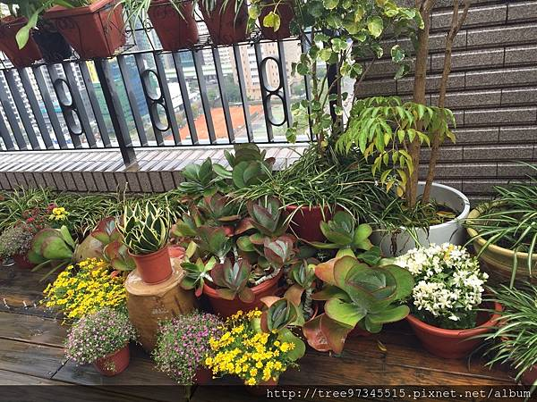 英倫風空中花園作品集_170609_0007.jpg