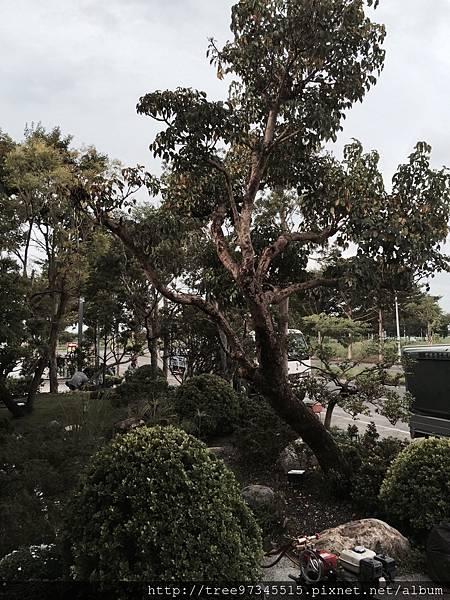 虎尾高鐡景觀工程_170612_0024.jpg